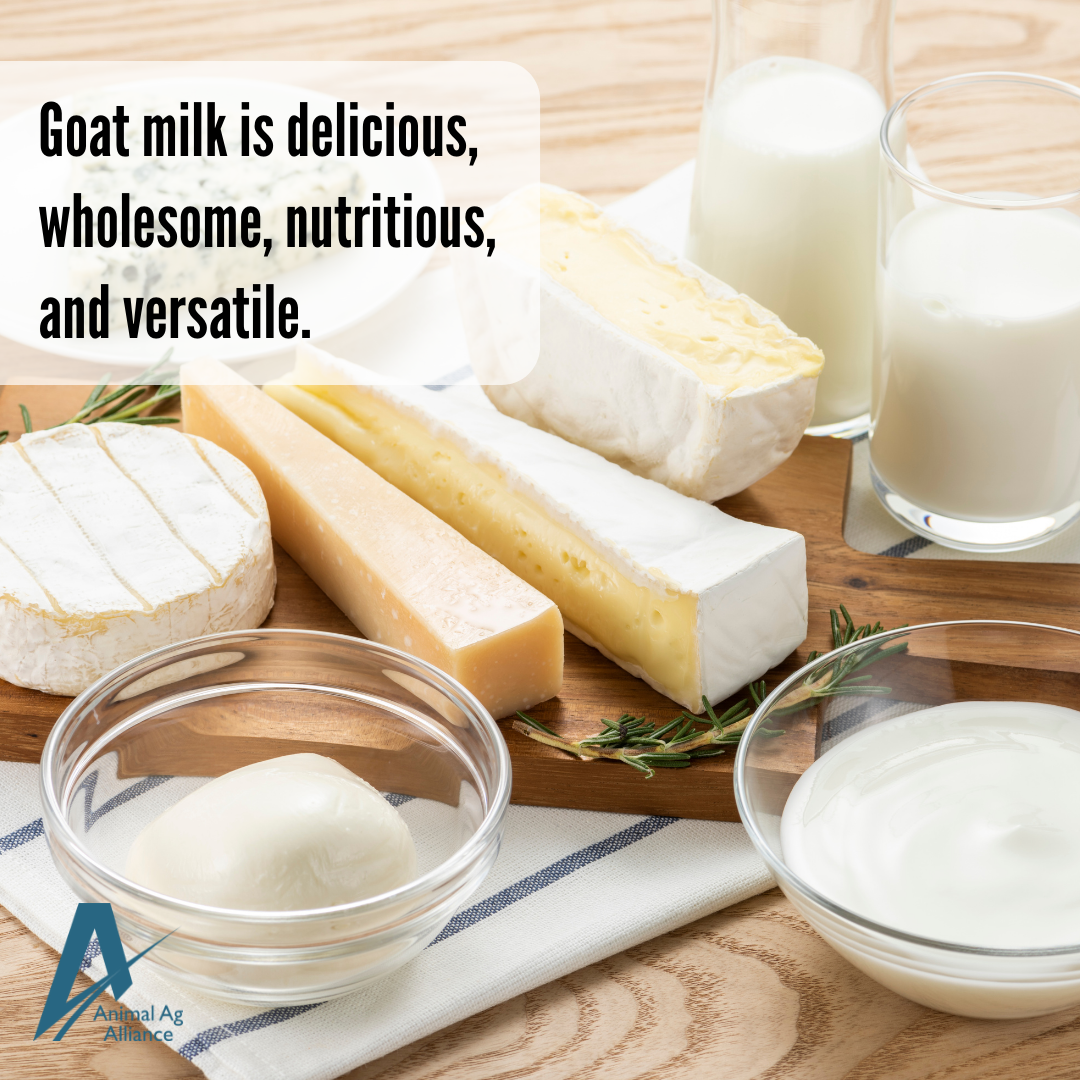 Goat milk is delicious, wholesome, nutritious, and versatile.