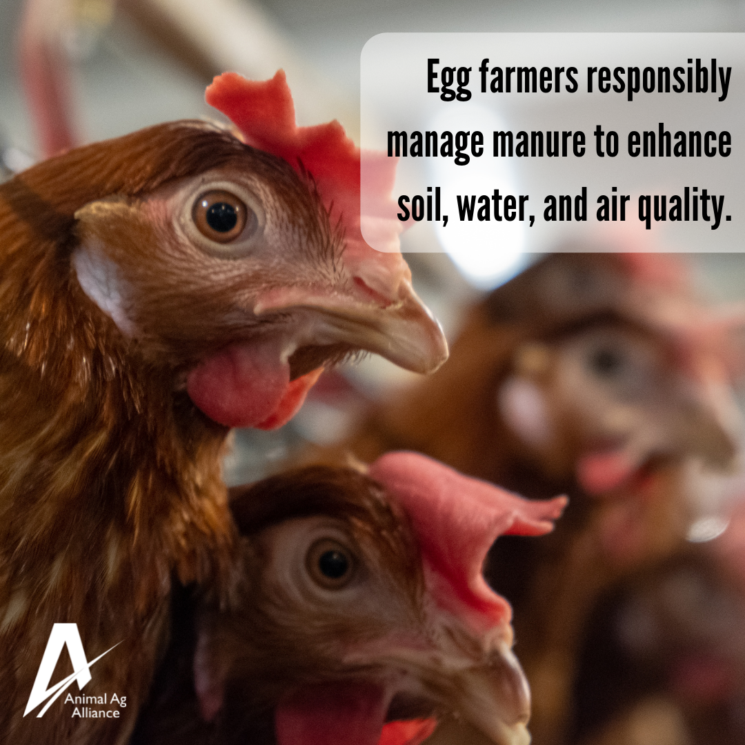 Egg farmers responsibly manage manure to enhance soil, water, and air quality
