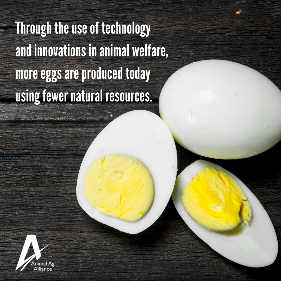 Through the use of technology and innovation in animal welfare, more eggs are produced today using fewer natural resources