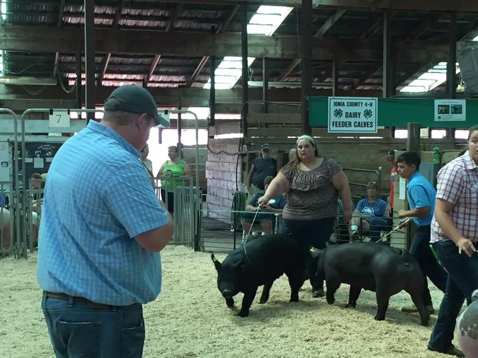 Youth showing a pig at a county fair