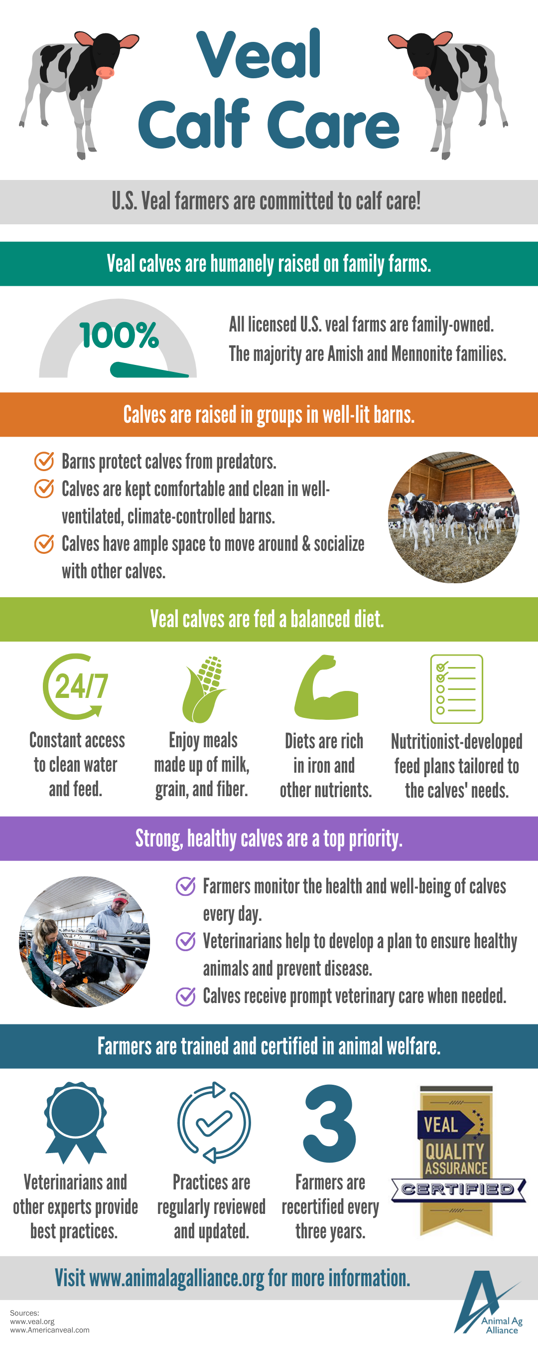 Veal calf care infographic